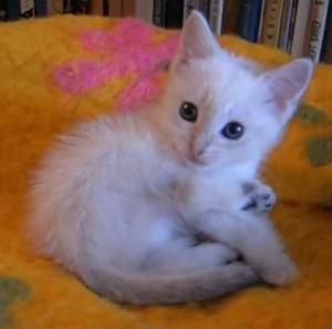 Линда котёнок